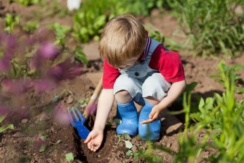 The Endless Summer - Fun Projects For The Whole Family - Let's Plant A Garden