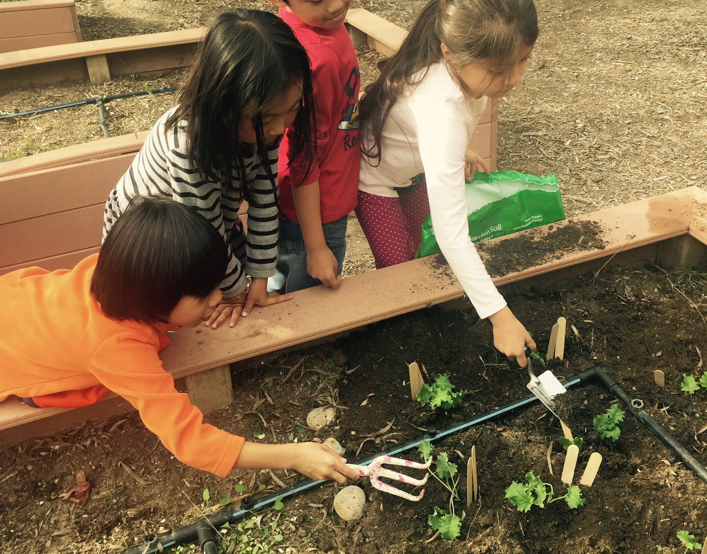 Children Planting Kale 4 2017